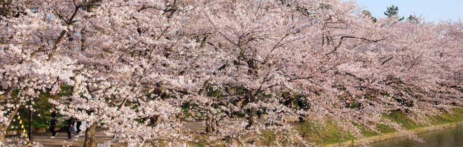 9-Day in Tohoku Spring Itinerary