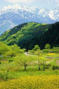 japan_beautiful_spring_landscape