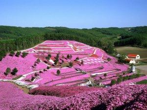 higashimokoto_shibazakura_park_in_spring