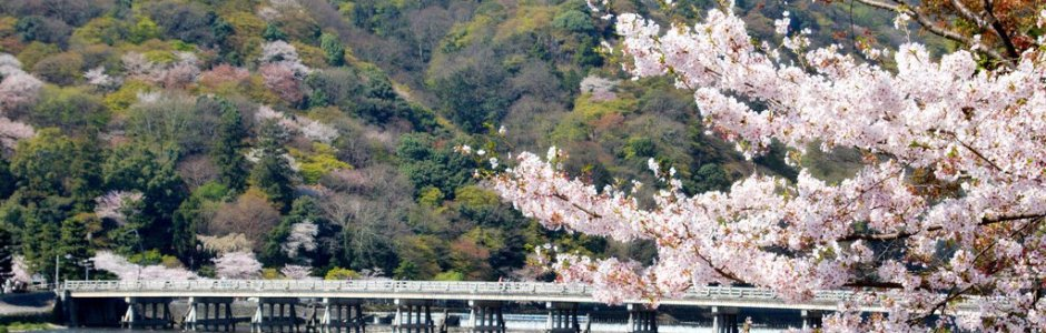 4 Days in Kyoto Spring Itinerary – Cherry Blossom