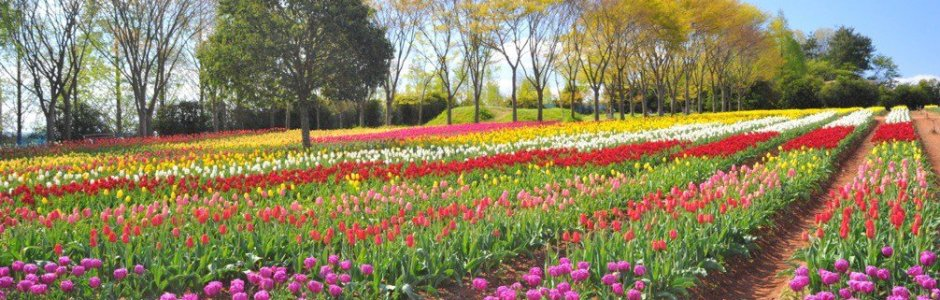 10 Best Places to See Tulips in Japan