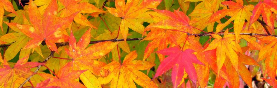 6 best places to see autumn leaves in sapporo kyuhoshi