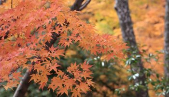 6 Famous Shrines to Visit in Japan | Kyuhoshi