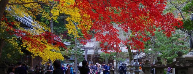 7 Best Places to See Fall Foliage in Osaka