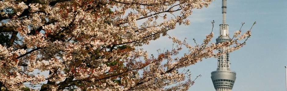 1-Day in Tokyo Spring Itinerary – Cherry Blossom