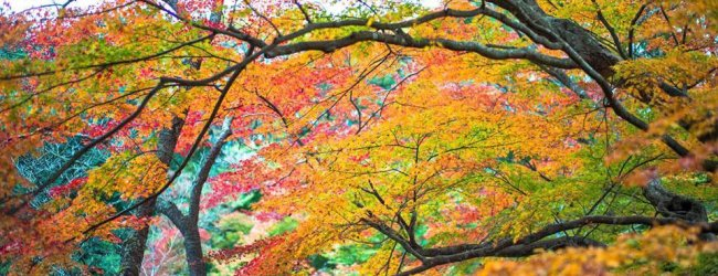 12 Best Places to See Autumn Leaves in Kyushu