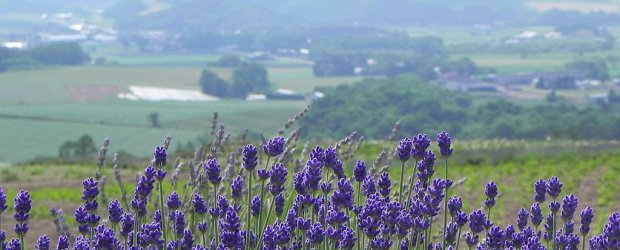 2-Week in Hokkaido Summer Itinerary