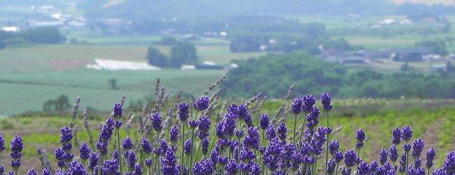 Two Weeks in Hokkaido Summer Itinerary