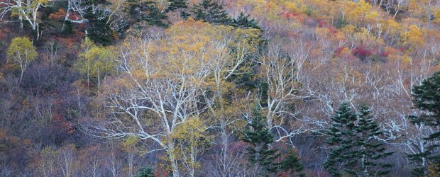 8 Best Places to See Fall Foliage in Nagano