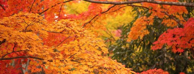 10 Best Places to See Fall Foliage around Tokyo
