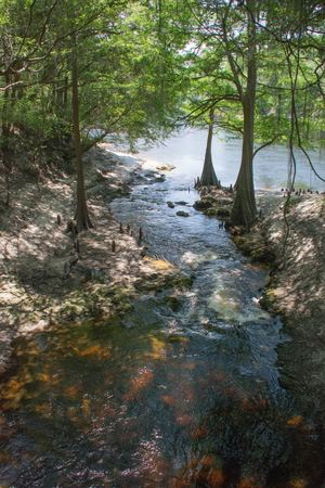 Lime Sink Run from the foot bridge, looking out over the Suwannee River