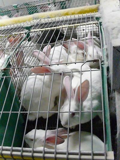 densité élevée des cages