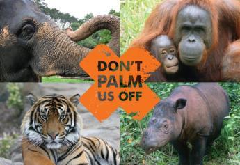 vegan-huile de palme