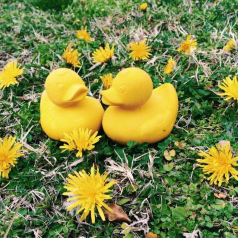 Jouet de bain Canard jaune Oli & Carol