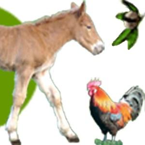 Icone Logo La Ferme des Péquélets