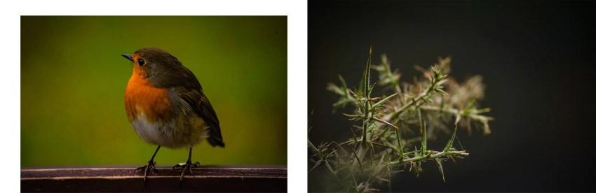 Upper Lake oiseau détail