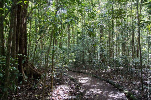 Wongabel forest Australia Queensland