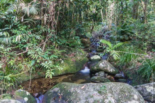 Mossman Gorges rainforest qld
