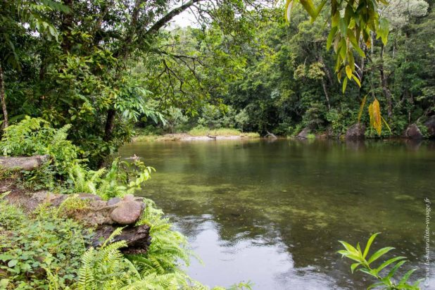rainforest Babinda Queensland