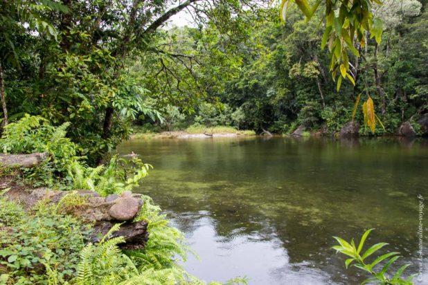 rainforest Babinda Queensland