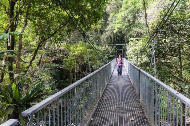 rainforest Mossman Gorges
