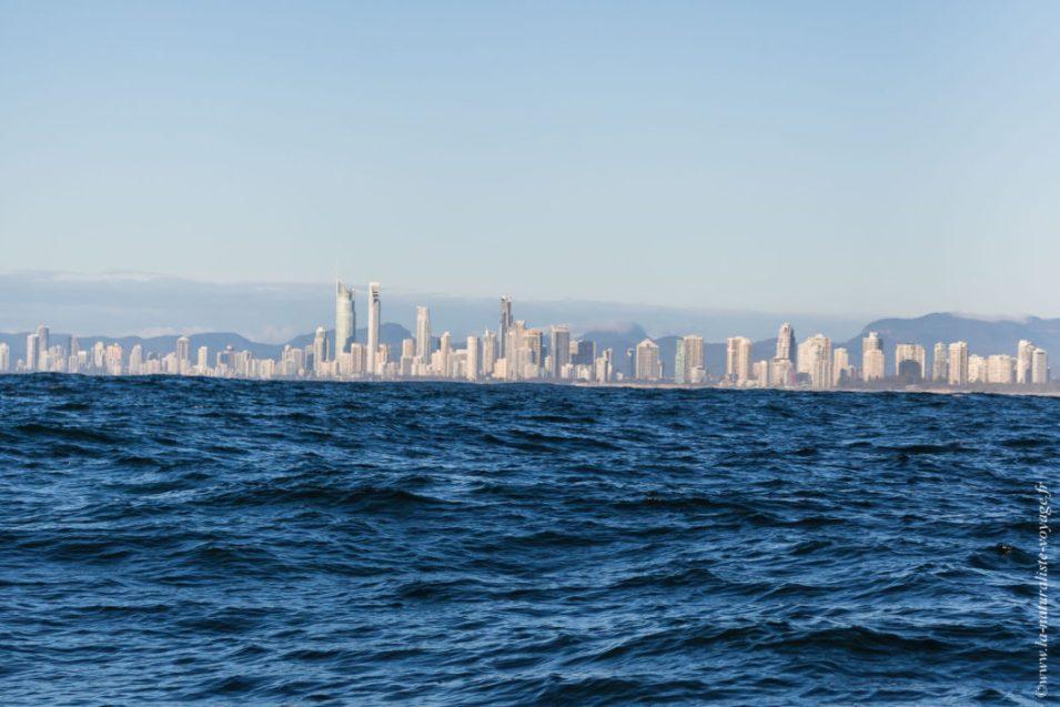pelagic boat trip