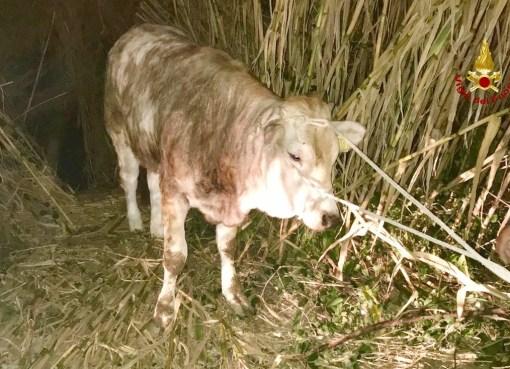 """< img src=""""https://www.la-notizia.net/vitella"""" alt=""""vitella"""""""