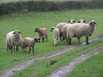 "< img src=""https://www.la-notizia.net/pastorizia"" alt=""pastorizia"""