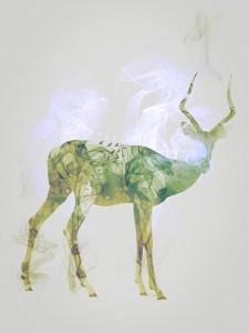 Impala, Smoky nature I