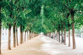 paris-jardin-balade-palais-royal-la-seinographe