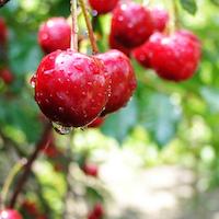 cerise épicerie fine bio et locale