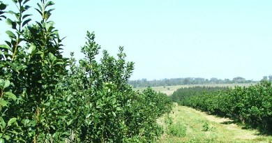 Oficinas móviles del registro de productores y yerbales del INYM