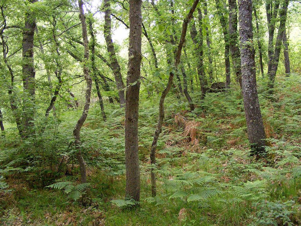 bosque de Labaniego