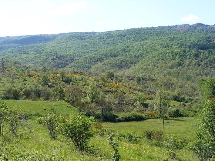 verdes prados y bosque