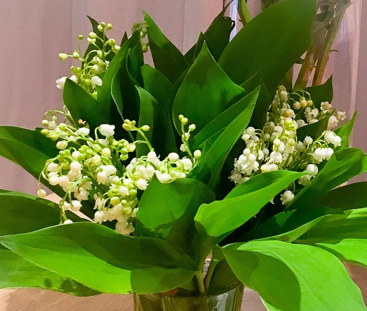 Lily of the valley for luck labeille franaise izmirmasajfo