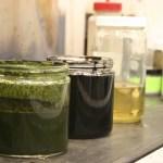 Von Algen zu Rohöl in einer Stunde
