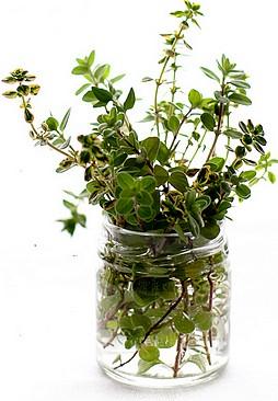 erbe magiche in vaso