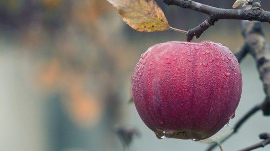 la mela nella la festa del raccolto wicca
