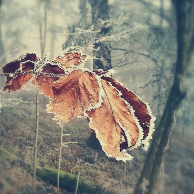Icy by Ka L-O-K