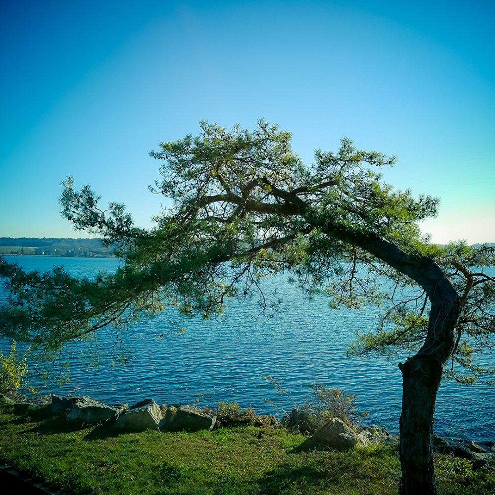 Twisted Tree by Ka L-O-K
