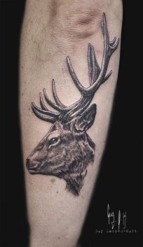 The Stag by Guy Labo-O-Kult