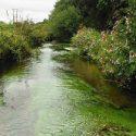 hydrobiologie-rivière-milieu-naturel