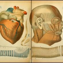 Atlas anatomique pour écoliers en 1879