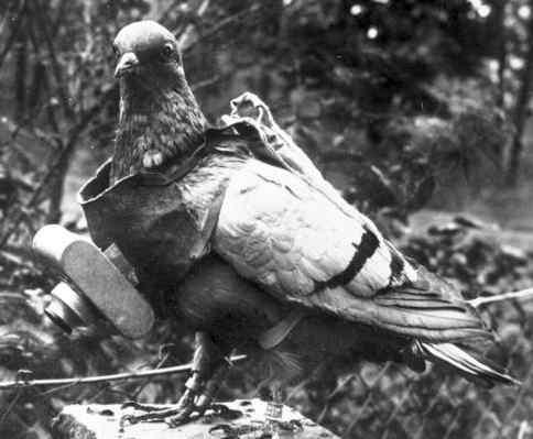 pigeon camera photographie aerienne 03 Des pigeons photographes pour la reconnaissance aérienne