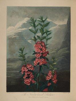 temple-fleur-illustration-Robert-Thornton-29