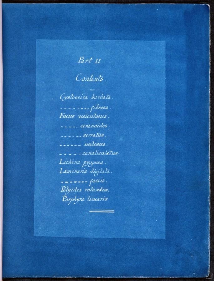 cyanotype-anna-atkins-algue-a15