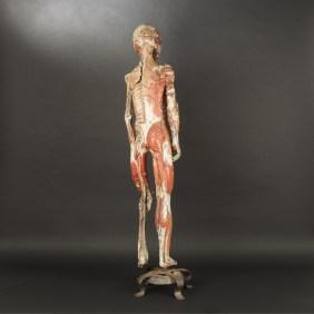 modele-anatomique-docteur-Auzoux-1820-13