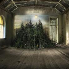La campagne débordante dans des salons abandonnés