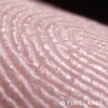 La transpiration des pores au bout des doigts