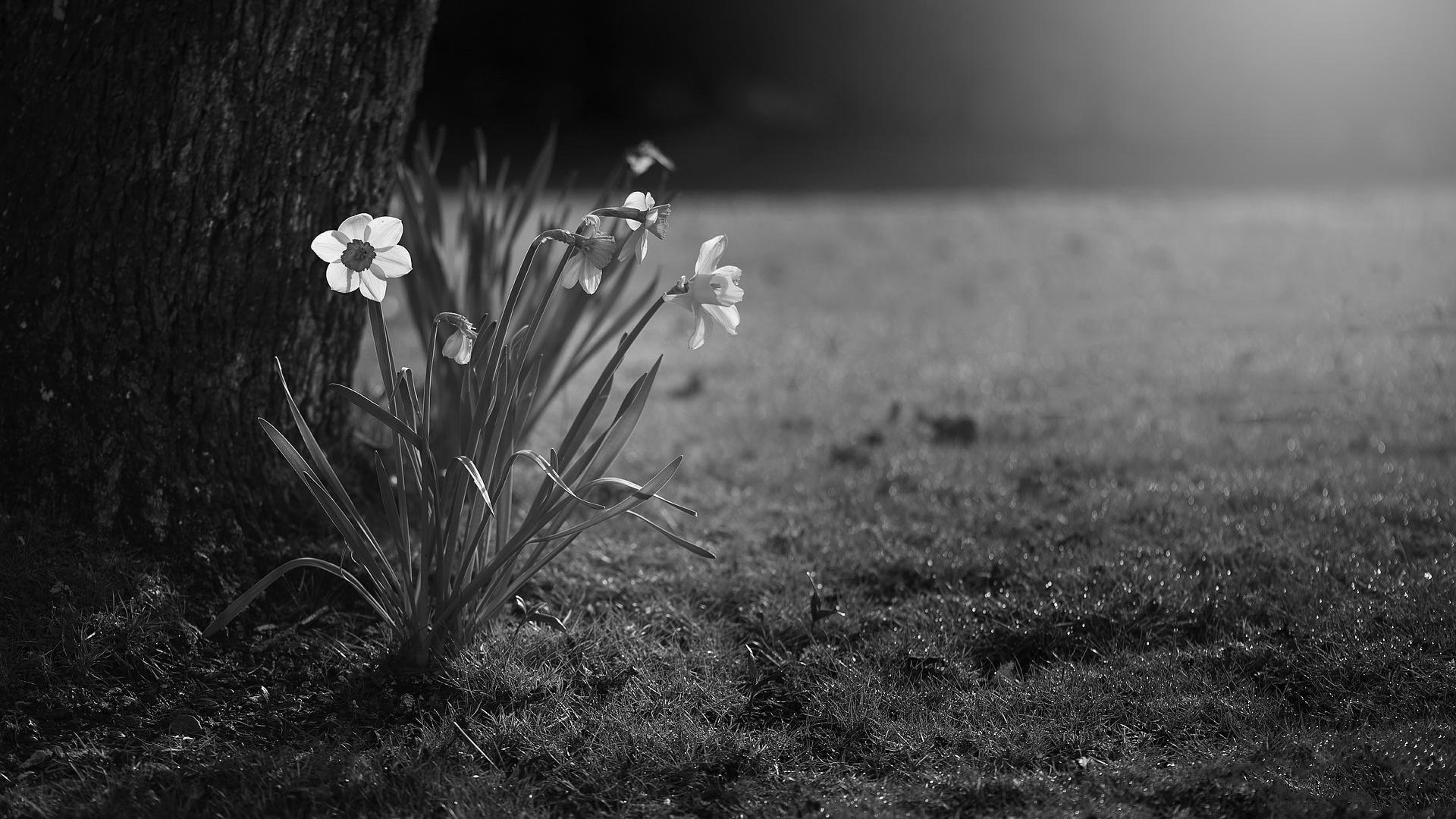 Il vento e il narciso - Emilia barbato